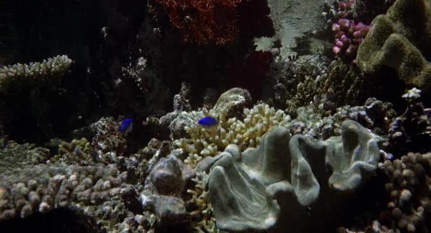 Blue Lagoon.mkv_001117240